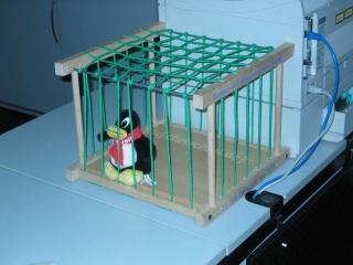 Pinguin im Käfig